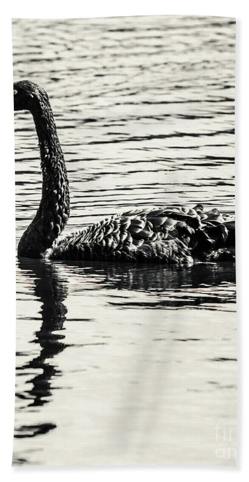 Black Bath Towel featuring the photograph Reflective Black Swan by Jorgo Photography - Wall Art Gallery