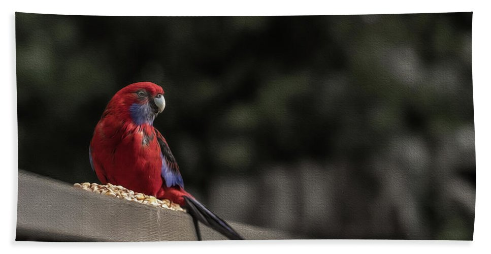 Rosella Bath Towel featuring the photograph Rosella 1 by Leigh Henningham