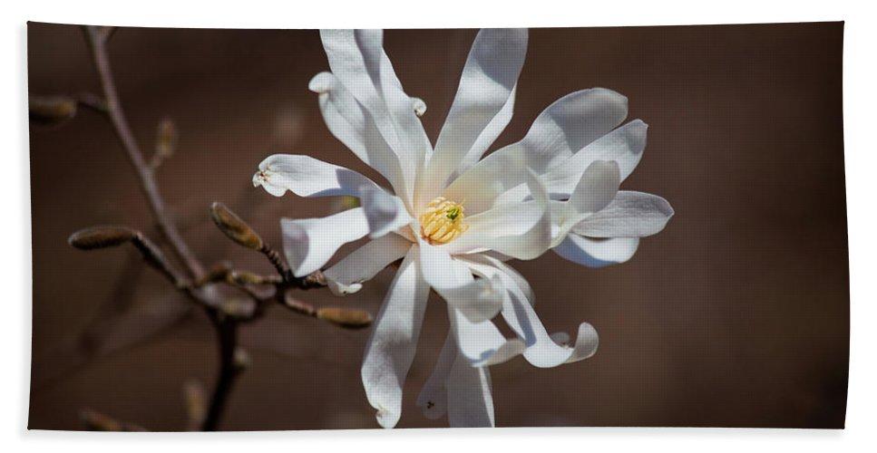 Royal Star Magnolia Flower Bath Towel featuring the photograph Royal Star Magnolia Flower by Trevor Slauenwhite