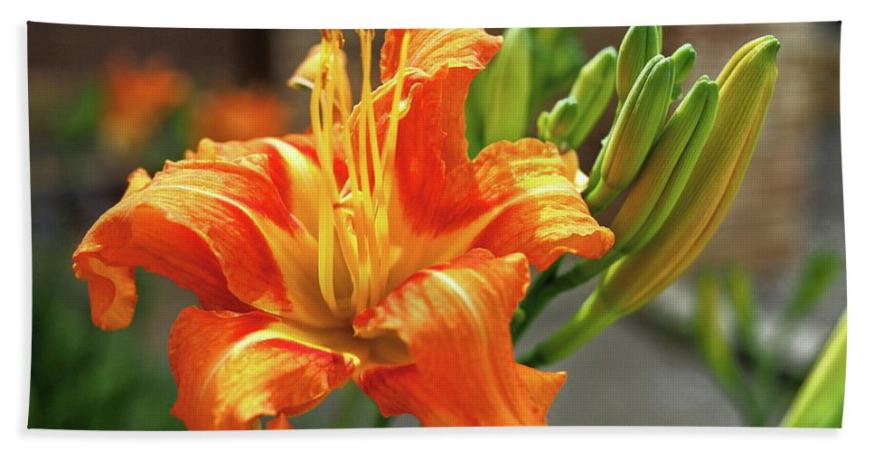 Orange Bath Towel featuring the photograph Spring Flower 14 by C Winslow Shafer