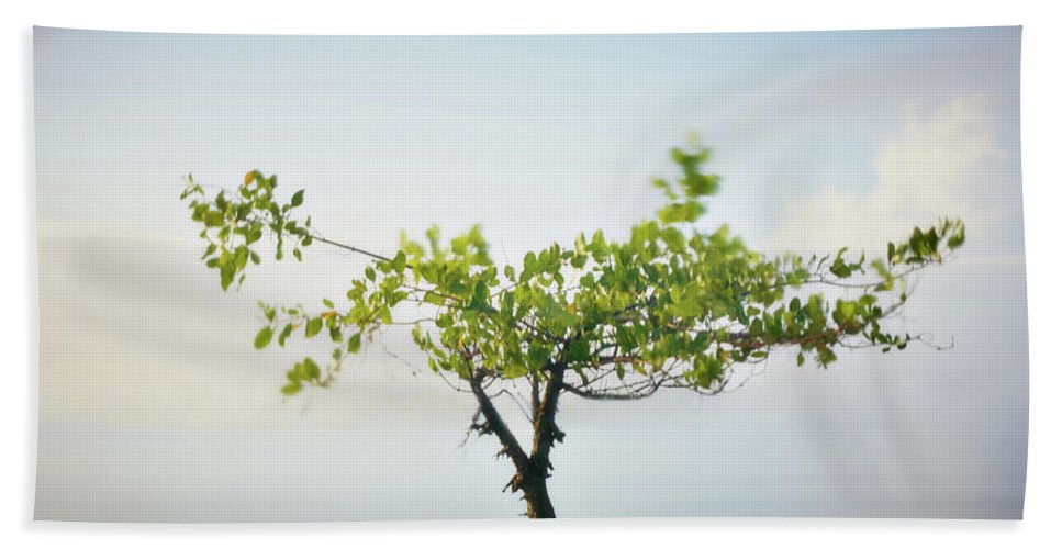 Tree Bath Towel featuring the photograph Tree And Silence by Trinidad Dreamscape