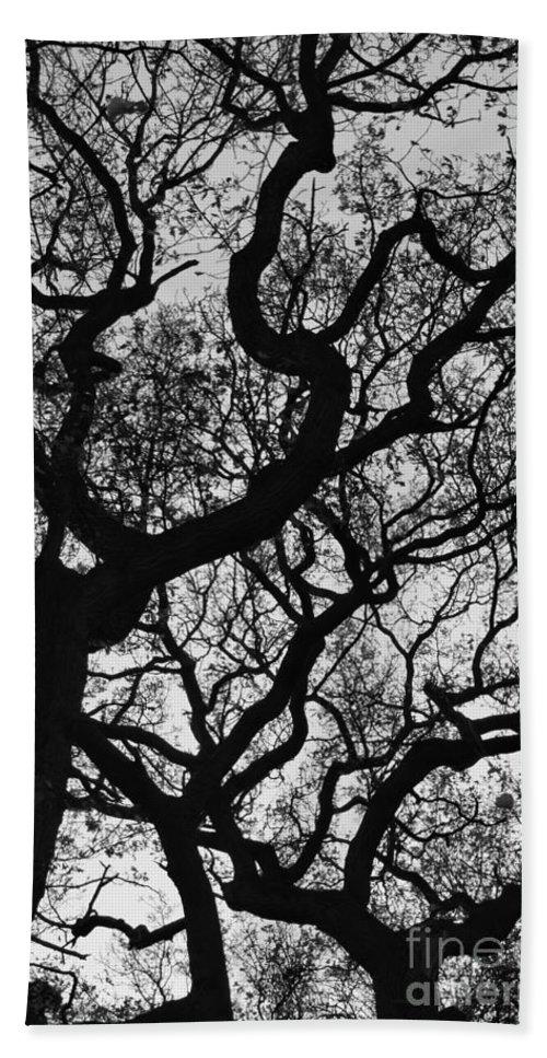 Oak Tree Hand Towel featuring the photograph Twisted Autumn oaks 1, monochrome by Paul Boizot