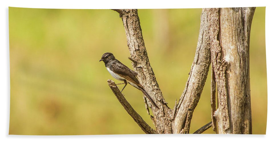 Wildlife Bath Towel featuring the photograph Willie Wagtail Woodland by Jorgo Photography - Wall Art Gallery
