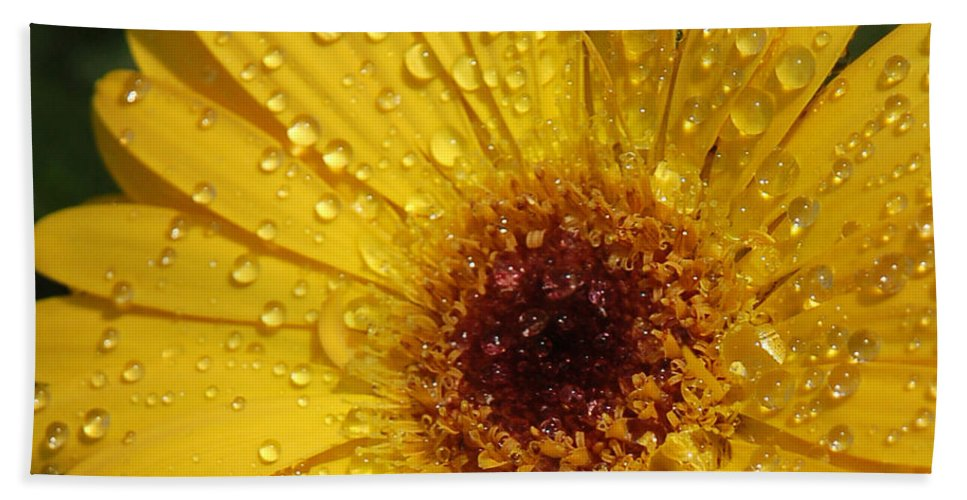 Yellow Hand Towel featuring the photograph Yellow Gerbera by Suzanne Gaff