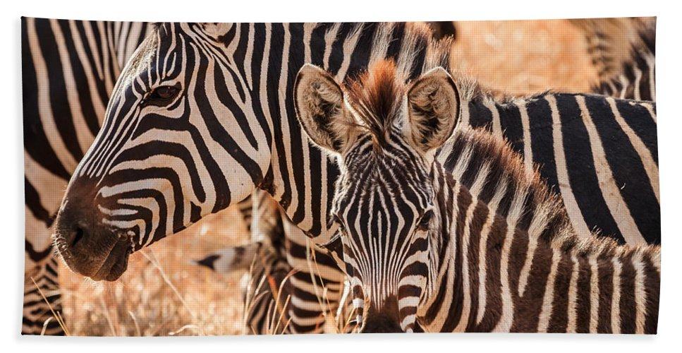 3scape Bath Towel featuring the photograph Zebras by Adam Romanowicz