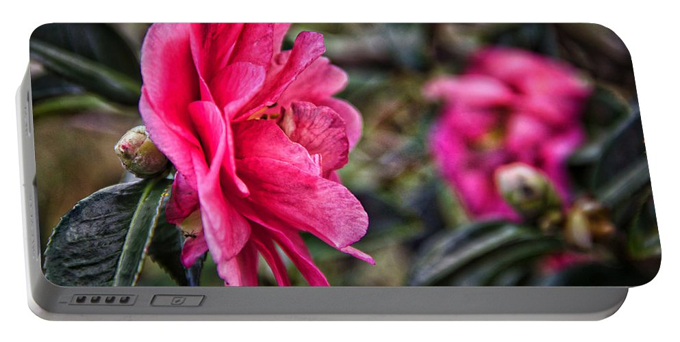 Flower Portable Battery Charger featuring the photograph Camellia De Mamie by Alice Gipson