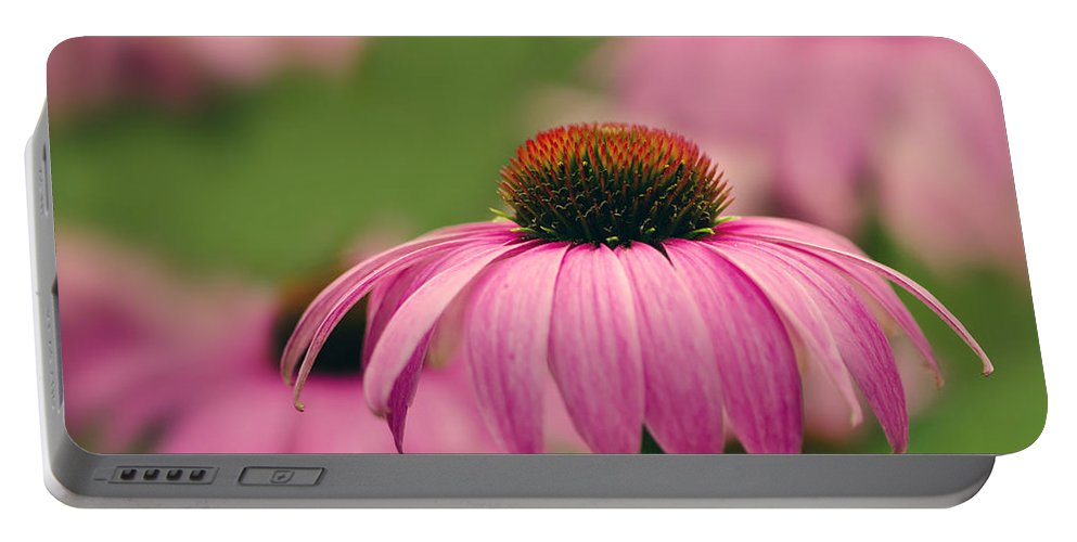 Asteraceae Portable Battery Charger featuring the photograph Echinacea Purpurea by TouTouke A Y