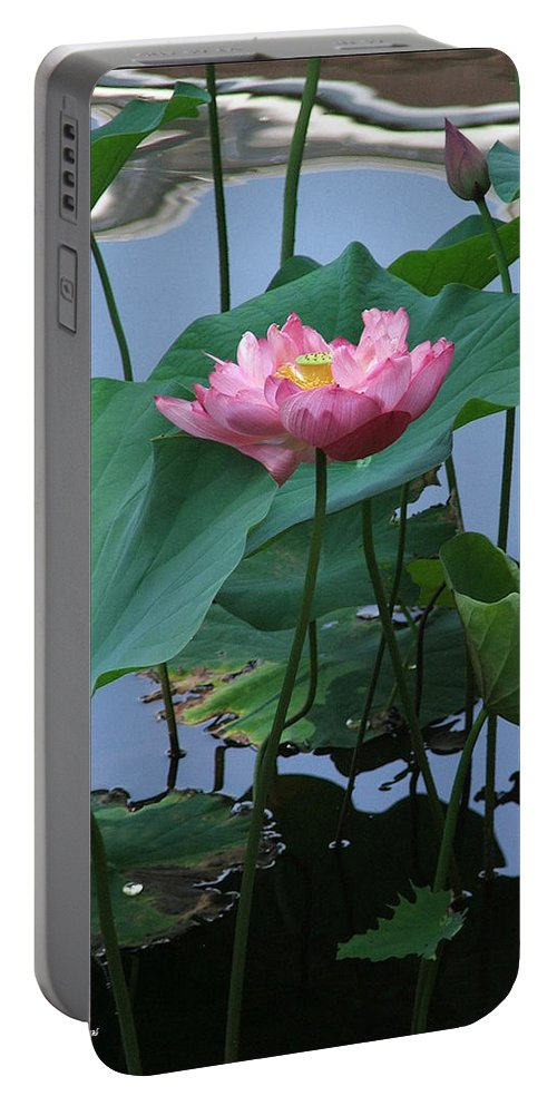 Lotus Portable Battery Charger featuring the photograph Lotus Flower At Calloway by Robert Meanor