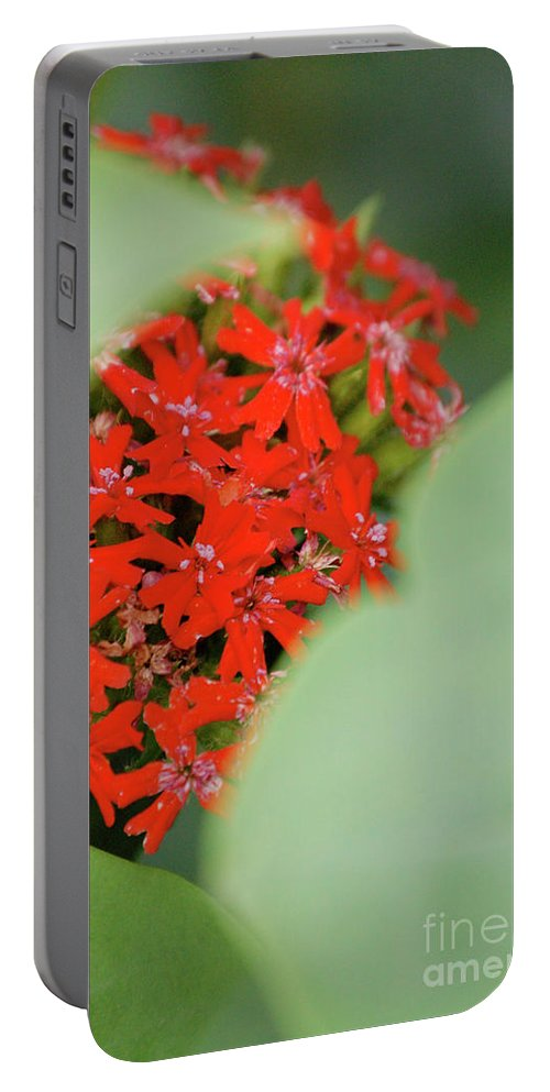 First Star Art Portable Battery Charger featuring the photograph Red Butterfly Buds By Jammer by First Star Art