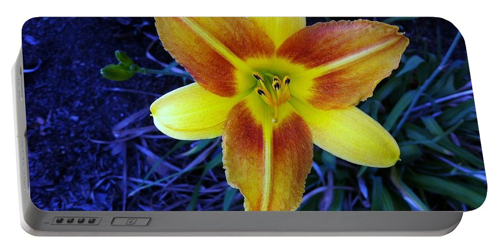 Flower Portable Battery Charger featuring the photograph Seek And You Will Find by John Glass