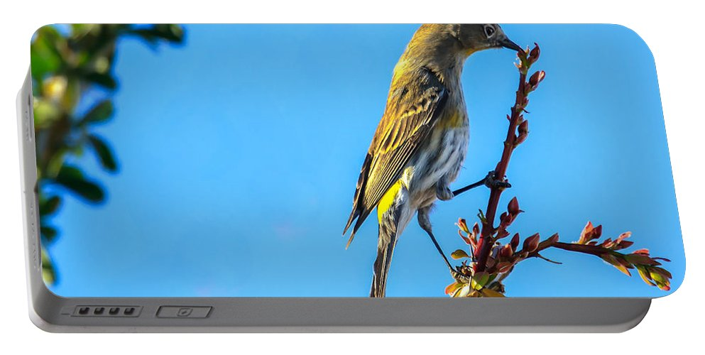 Small Portable Battery Charger featuring the photograph Yellow-rumped Warbler by Robert Bales
