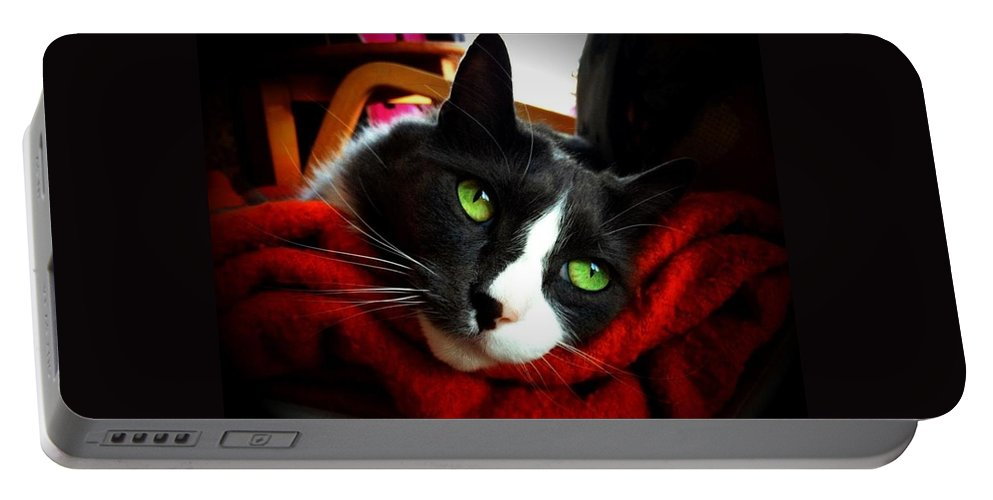 Cat Portable Battery Charger featuring the photograph Grey Garden by Jennifer Kuehne