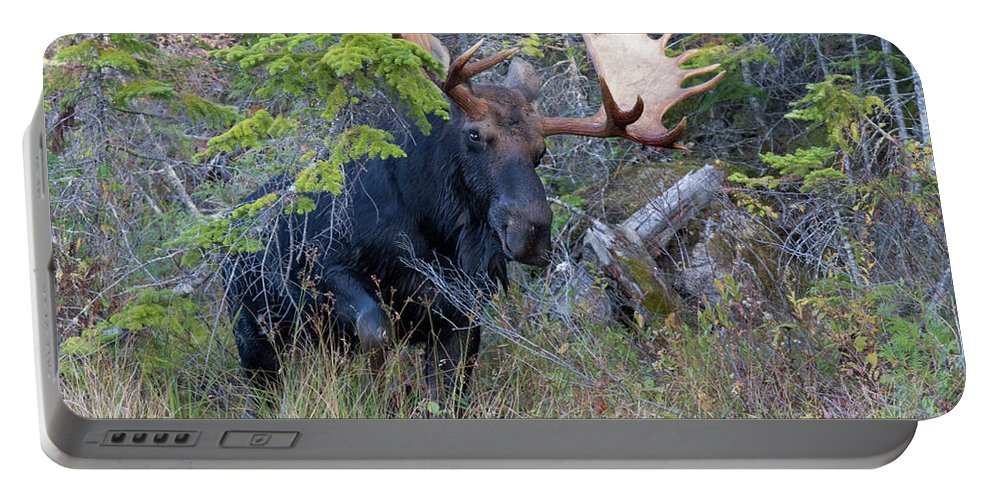 Bull Portable Battery Charger featuring the photograph 0339 Bull Moose 3 by Steve Sturgill