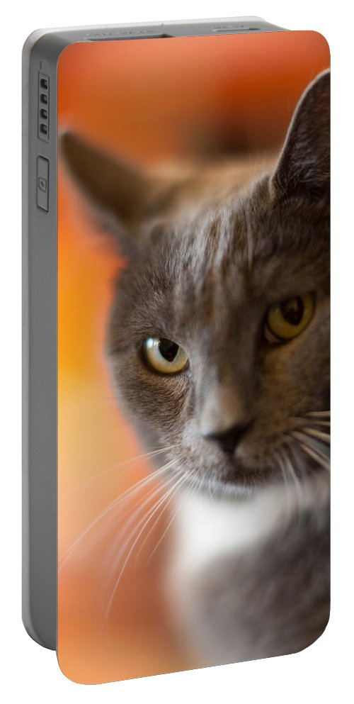 Cat Portable Battery Charger featuring the photograph A Peek by Mike Reid