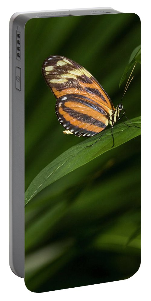 Antennas Portable Battery Charger featuring the photograph An Isabella Butterfly Eueides Isabella by Henry Georgi
