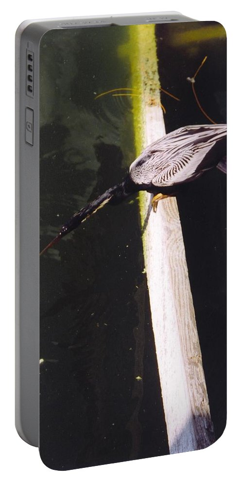 Lakes Park In Ft.myers Portable Battery Charger featuring the photograph Anhinga Or Snake Bird by Robert Floyd