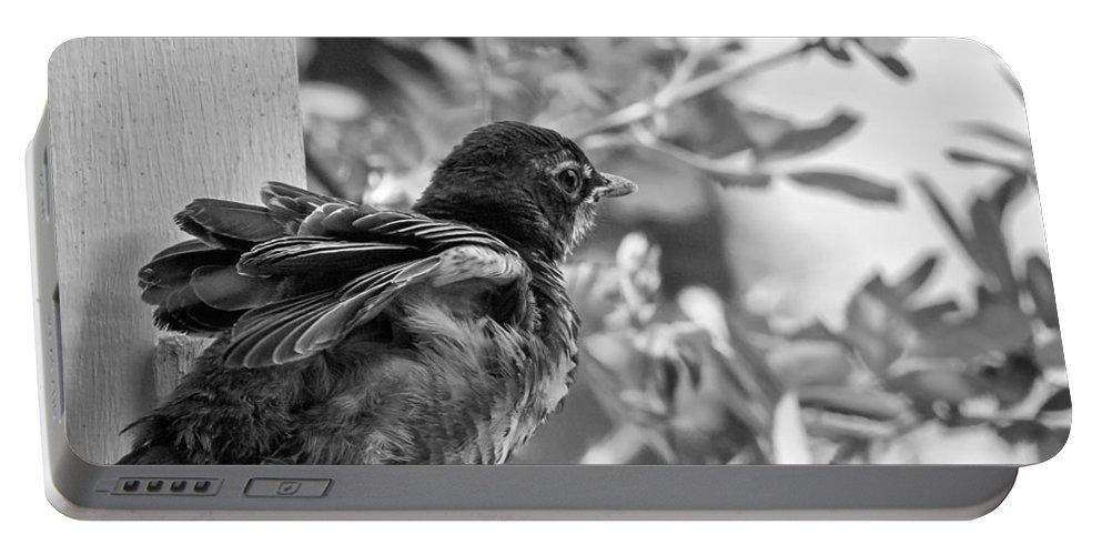 Steve Harrington Portable Battery Charger featuring the photograph Baby Robin - Revving Up by Steve Harrington