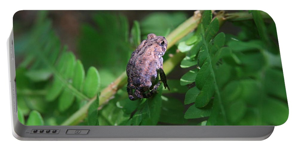 Frog Portable Battery Charger featuring the photograph Balancing Act  by Neal Eslinger
