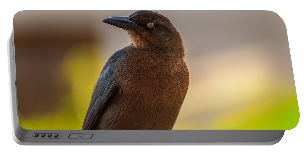 Animal Portable Battery Charger featuring the photograph Bird by Amel Dizdarevic