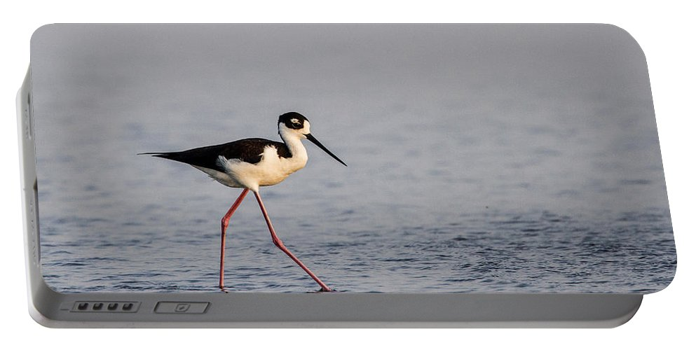 Doug Lloyd Portable Battery Charger featuring the photograph Blacknecked Stilt by Doug Lloyd