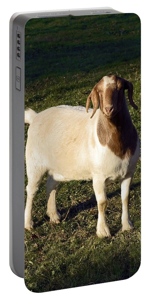 Boer Goat Standing Portable Battery Charger featuring the photograph Boer Goat by Sally Weigand