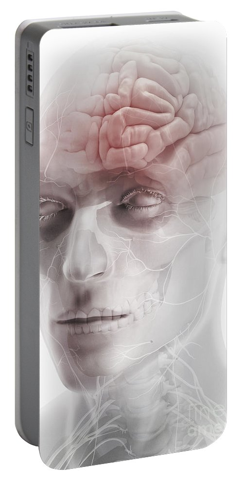 Cranium Portable Battery Charger featuring the photograph Brain And Nerves Of The Head by Science Picture Co