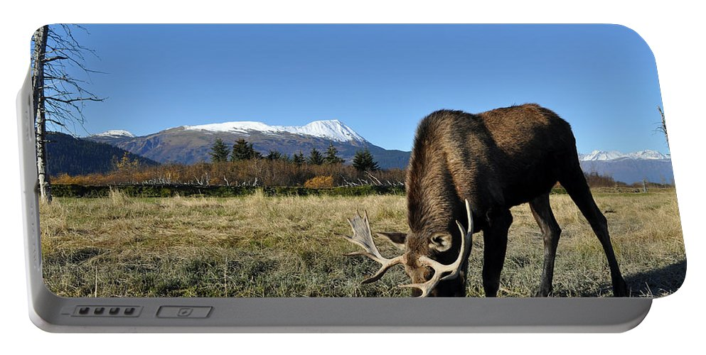 Alaska Portable Battery Charger featuring the photograph Bull Moose by Clint Pickarsky