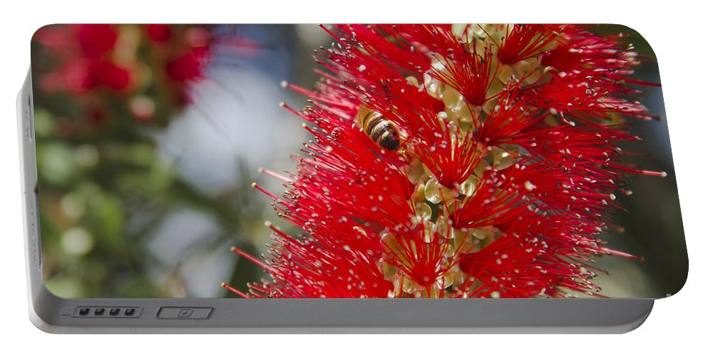 Portable Battery Charger featuring the photograph Callistemon Citrinus - Crimson Bottlebrush by Sharon Mau