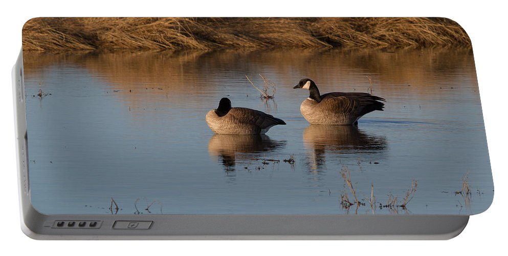 Canada Portable Battery Charger featuring the photograph Canada Geese by Dee Carpenter