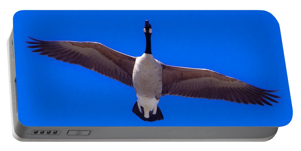 Photography Portable Battery Charger featuring the photograph Canadian Goose by Steven Natanson