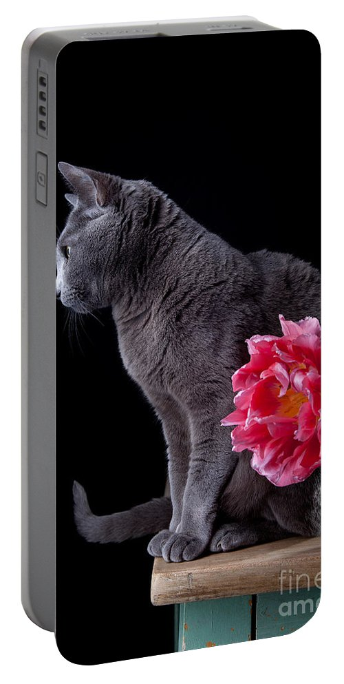 Cat Portable Battery Charger featuring the photograph Cat And Tulip by Nailia Schwarz