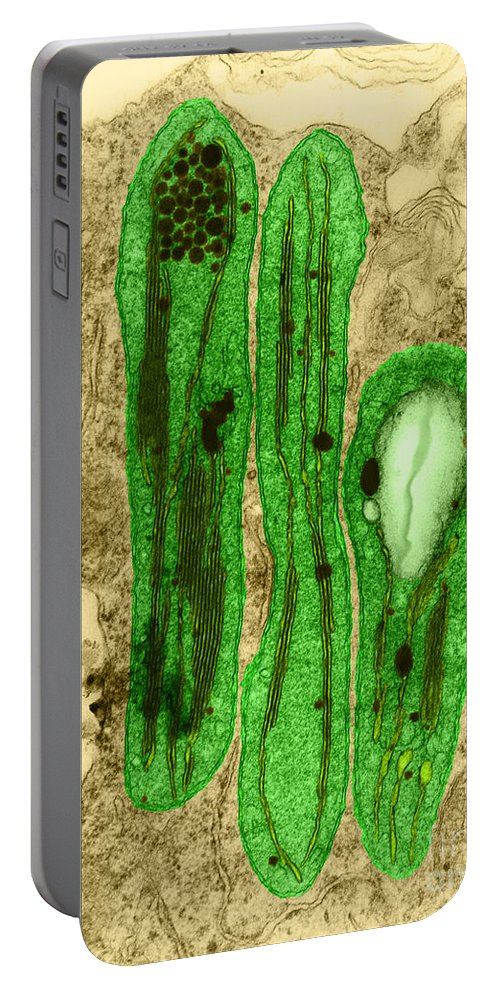 Science Portable Battery Charger featuring the photograph Chloroplasts Tem by David M. Phillips