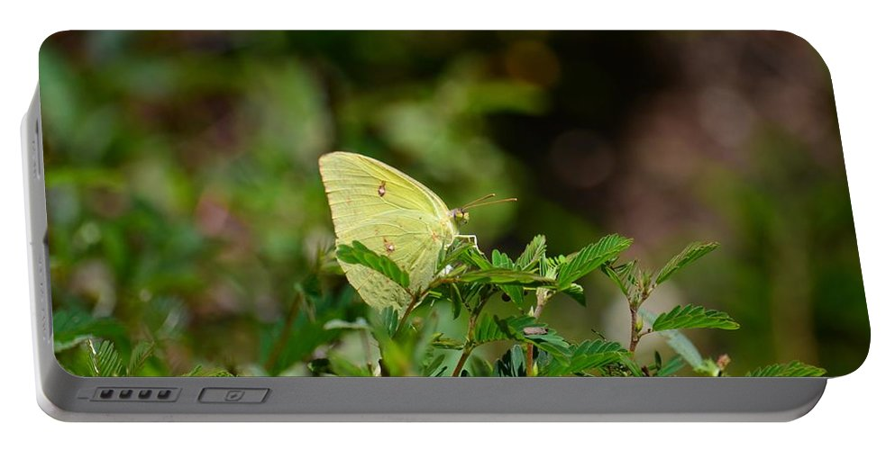 Clouded Sulphur Butterfly Portable Battery Charger featuring the photograph Clouded Sulphur Butterfly by Maria Urso