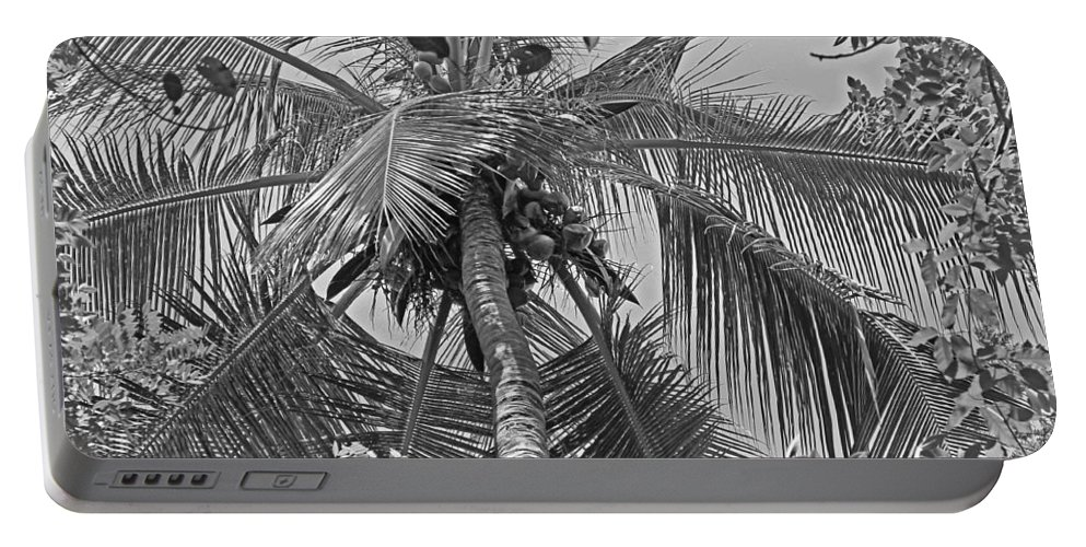 Coconut Palm Portable Battery Charger featuring the photograph Coconut Palm by Tony Murtagh