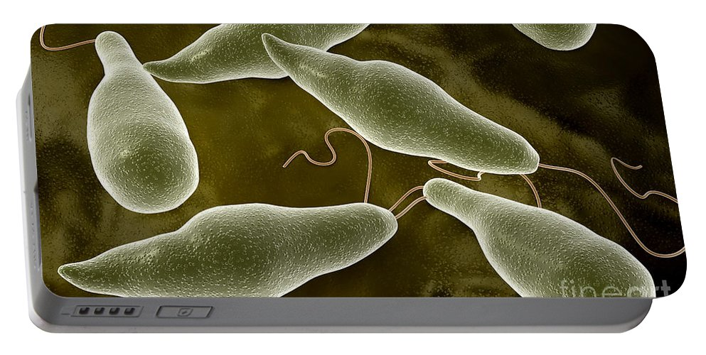 Color Image Portable Battery Charger featuring the digital art Conceptual Image Of Euglena by Stocktrek Images
