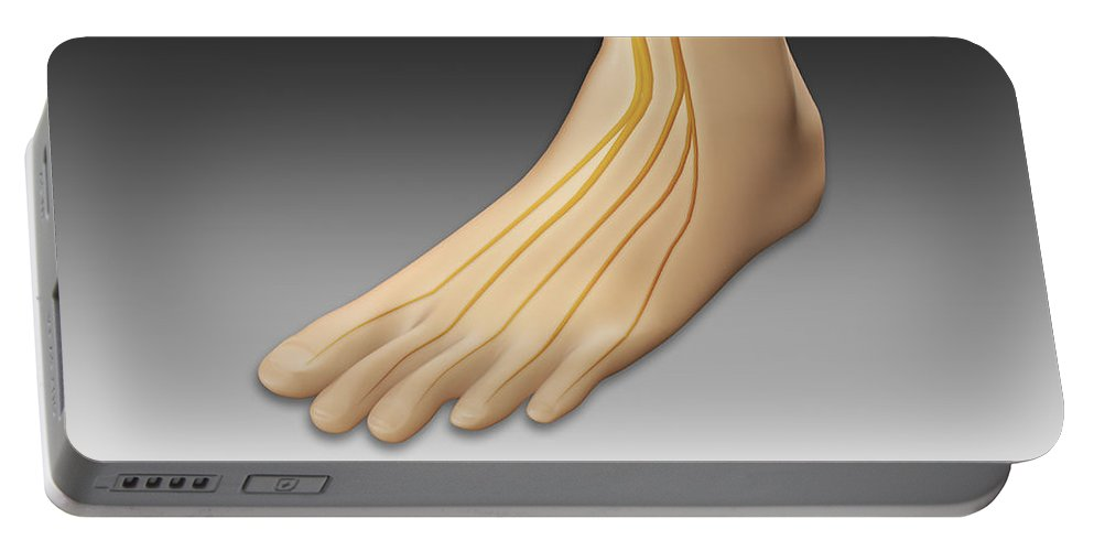 Horizontal Portable Battery Charger featuring the digital art Conceptual Image Of Human Foot by Stocktrek Images