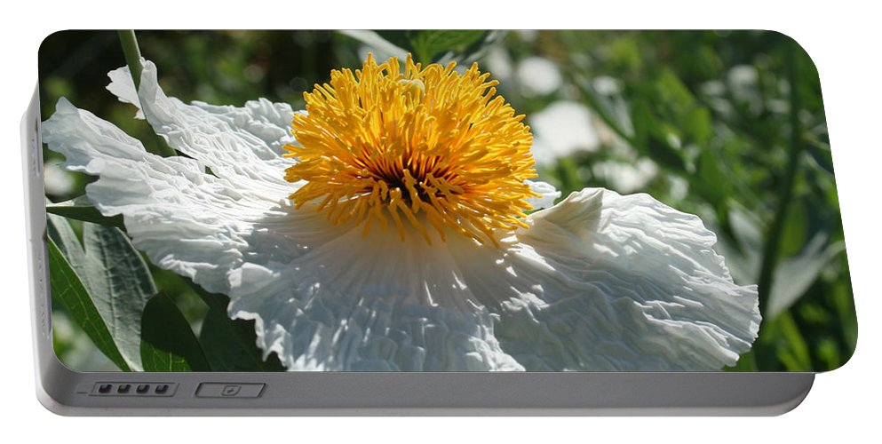 Coulters Matilija Poppies Portable Battery Charger featuring the photograph Coulter's Matilija Poppy 1 by Ellen Henneke