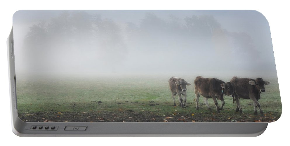 Cows Portable Battery Charger featuring the photograph Cows by Mats Silvan