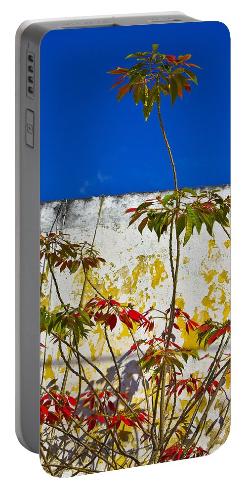 Diva Portable Battery Charger featuring the photograph Diva by Skip Hunt