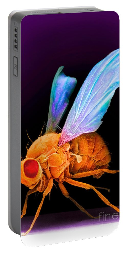 Scanning Electron Micrograph Portable Battery Charger featuring the photograph Drosophila by David M. Phillips
