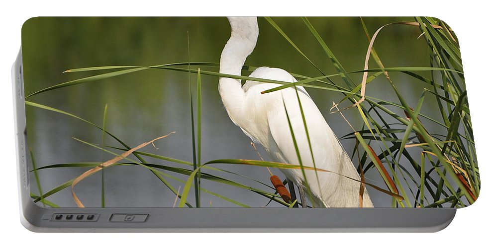Egret Portable Battery Charger featuring the photograph Egret In The Cattails by Al Powell Photography USA