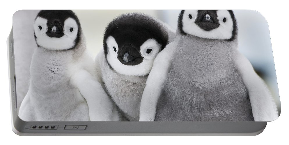 Emperor Penguin Portable Battery Charger featuring the photograph Emperor Penguin Chicks by Jean-Louis Klein and Marie-Luce Hubert