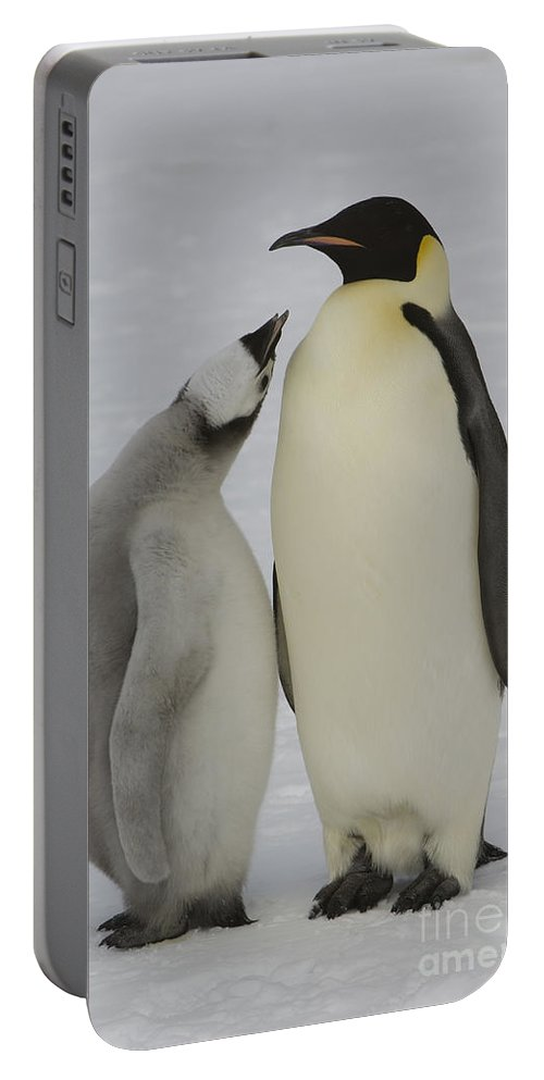 Emperor Penguin Portable Battery Charger featuring the photograph Emperor Penguins by John Shaw