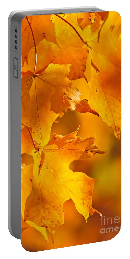 Fall Portable Battery Charger featuring the photograph Fall Maple Leaves by Elena Elisseeva