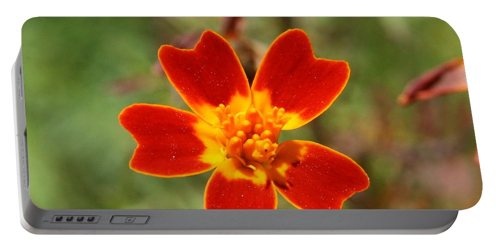 Orange Portable Battery Charger featuring the photograph Floral Sunshine by Neal Eslinger