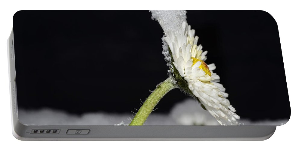 Flower Portable Battery Charger featuring the photograph Flower With Snow by Mats Silvan