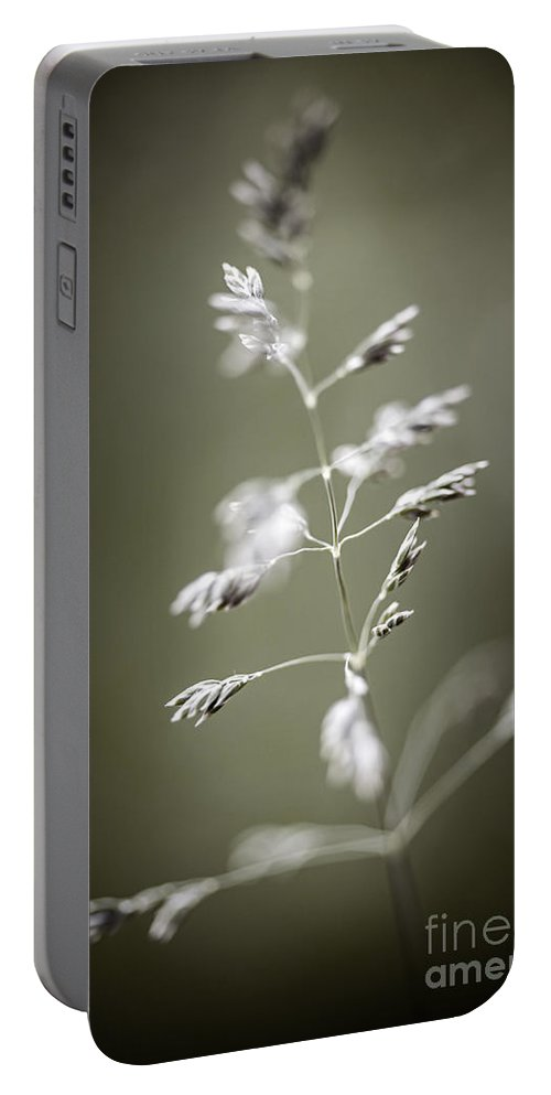 Grass Portable Battery Charger featuring the photograph Flowering Grass by Elena Elisseeva