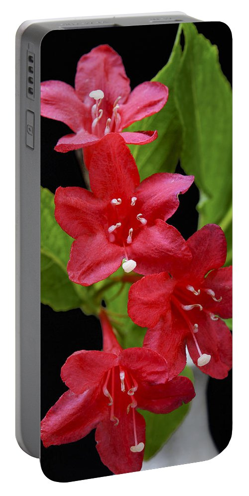 Plant Portable Battery Charger featuring the photograph Flowers Isolated On Black Background by Donald Erickson