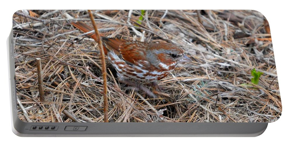 Fox Sparrow Portable Battery Charger featuring the photograph Fox Sparrow 2 by Thomas Phillips