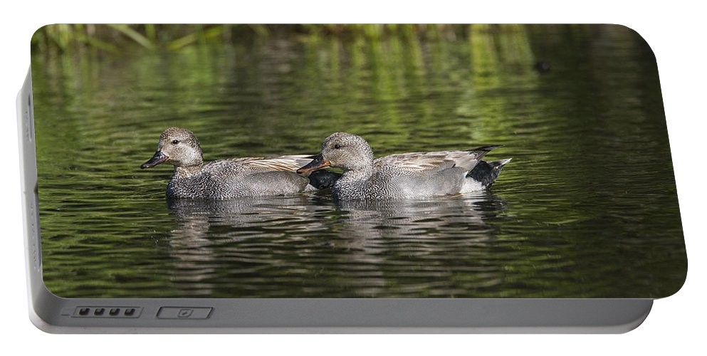 Doug Lloyd Portable Battery Charger featuring the photograph Gadwall Pair by Doug Lloyd